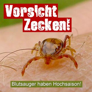 banner_zecken